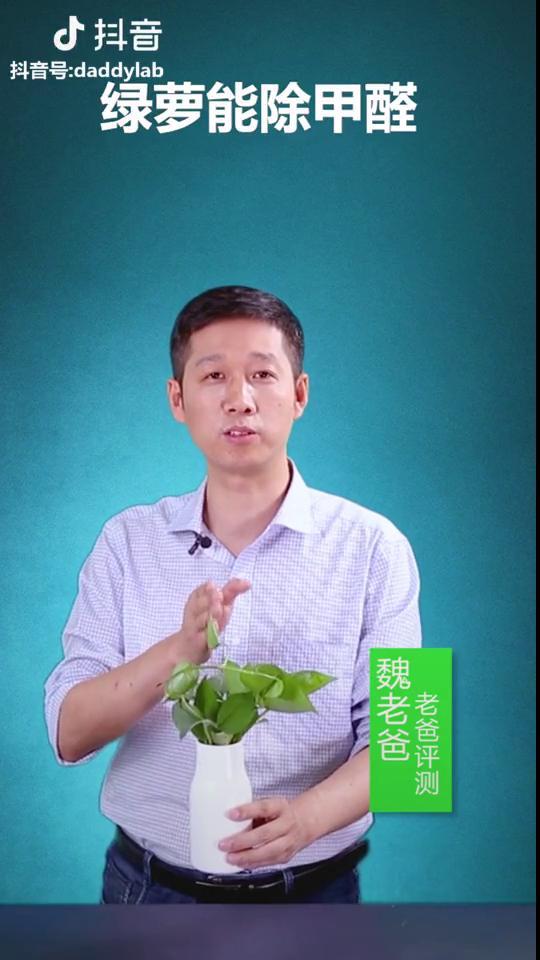 绿萝真的能除甲醛吗