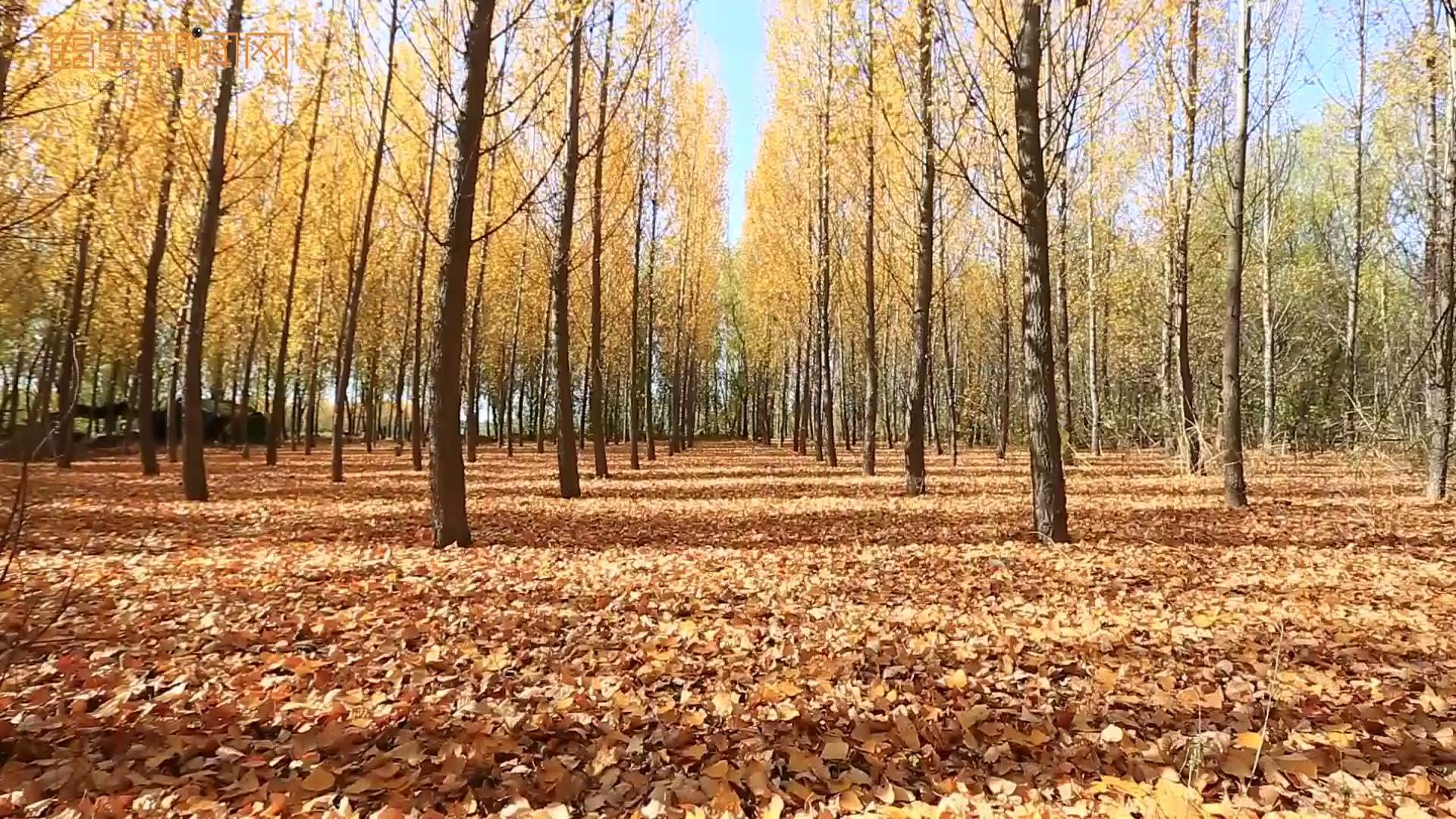 鹤鸣湖黄金岛:我可以等你一个夏天,但秋天你一定要来